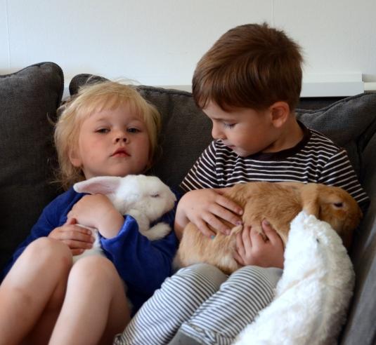 vilgot, kaniner, molly